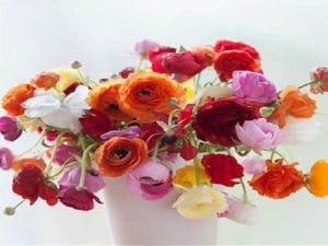 گل برای عیادت مریض