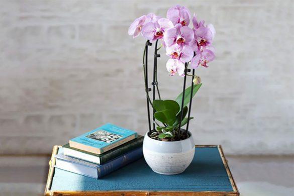 گل ارکیده چیست