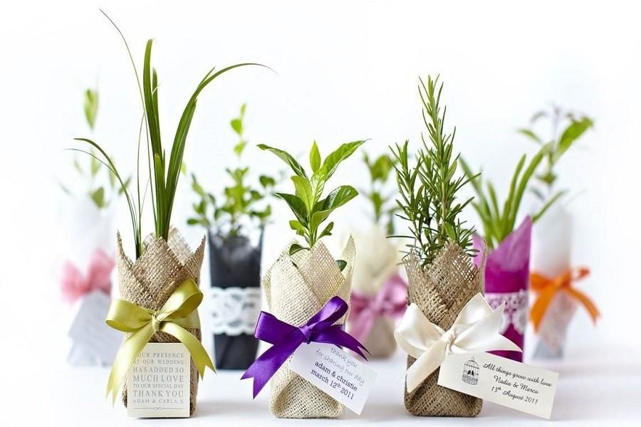 چه گیاهان آپارتمانی مناسب هدیه دادن می باشند؟