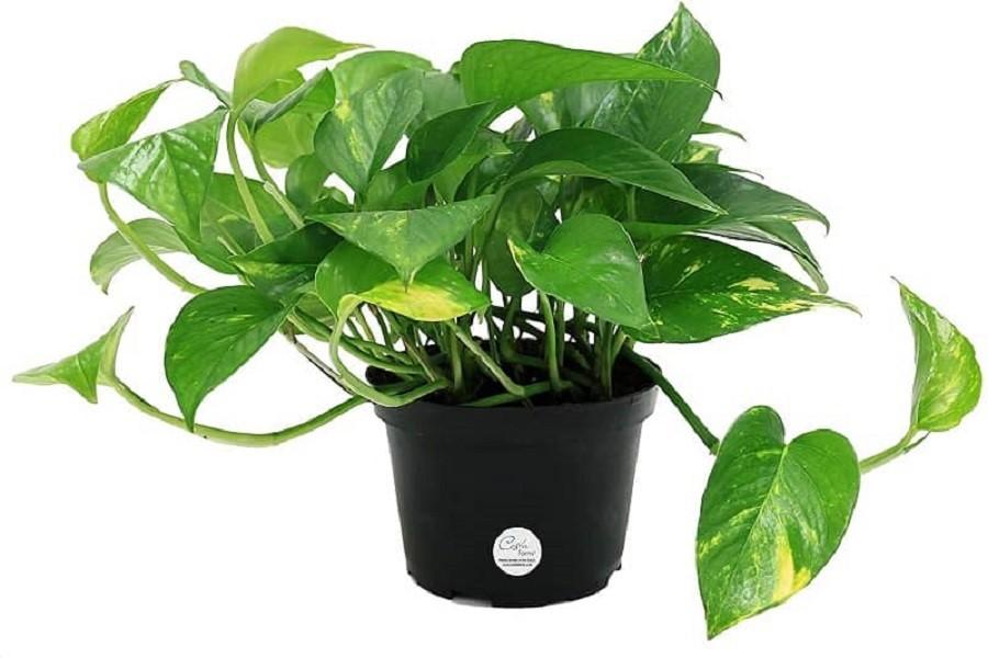 بهترین گیاهان برای هدیه دادن