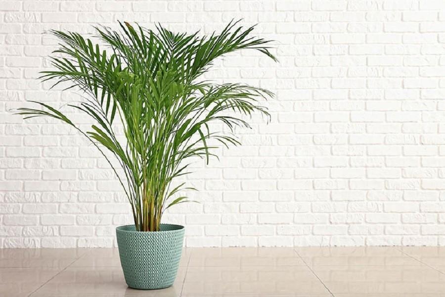 گیاه برای هدیه