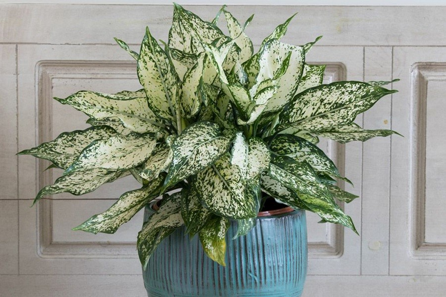 گیاه آپارتمانی زیبا برای هدیه دادن