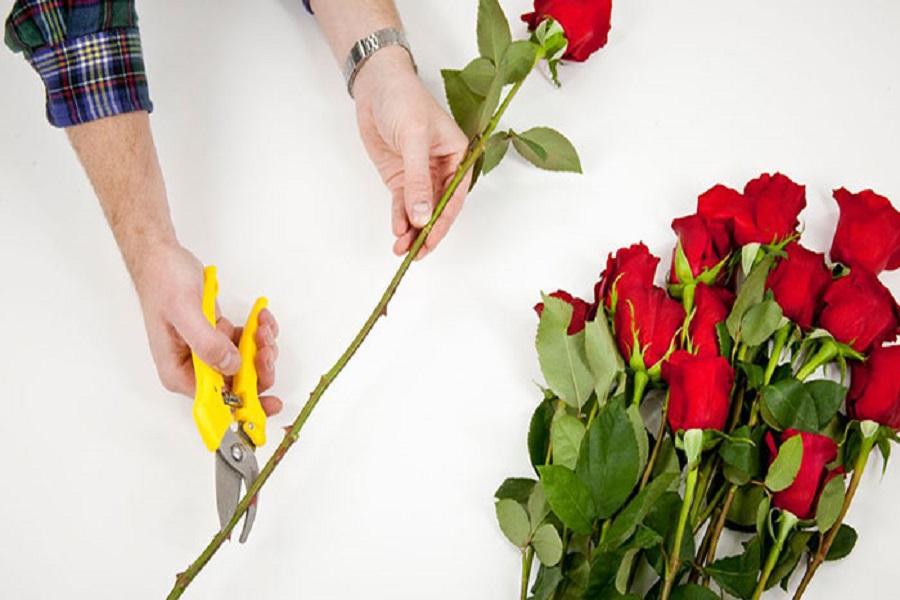 طرز نگهداری از گل