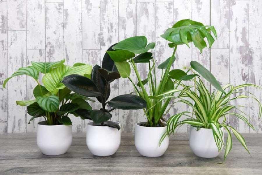 مشاوره گل و گیاه