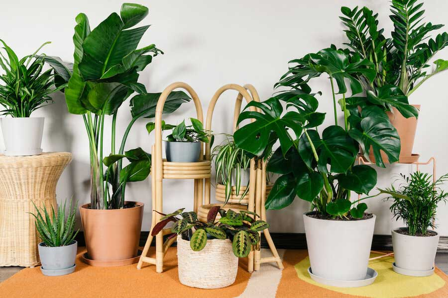 مشکلات گیاهان