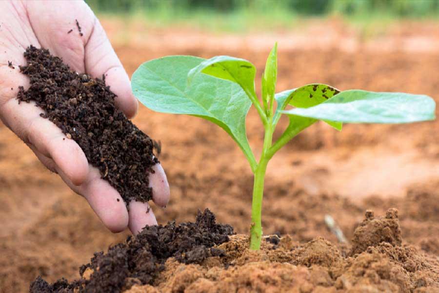 انواع مریضی گیاه