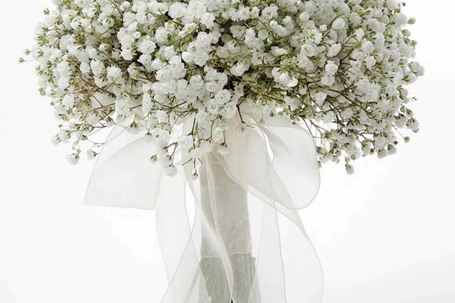 نماد گل ژیپسوفیلا