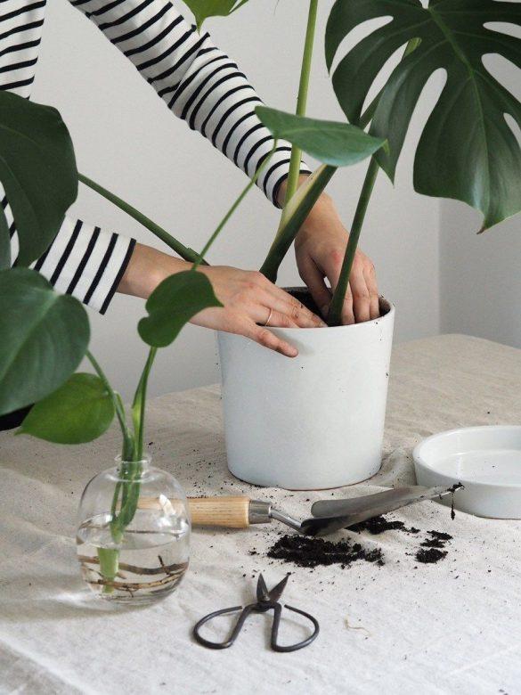 تعویض گلدان و خاک گیاه